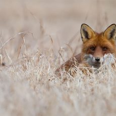 Furla announces commitment to a fur-free policy