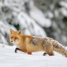 VF Corporation joins Fur Free Retailer